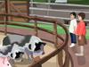 Animal Petting Zoo