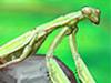 Smart Mantis